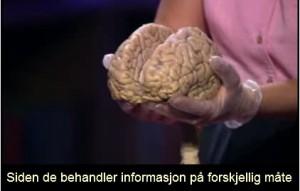 Hjerne02